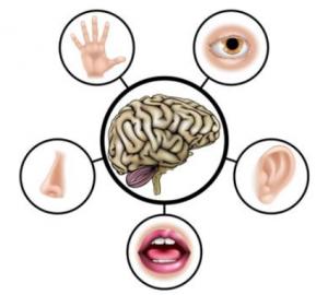 brain ergonomics